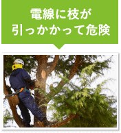 電線に枝が引っかかって危険
