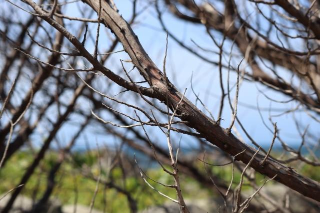 枯れた木を放置するのはやめよう。放置の危険性について解説します