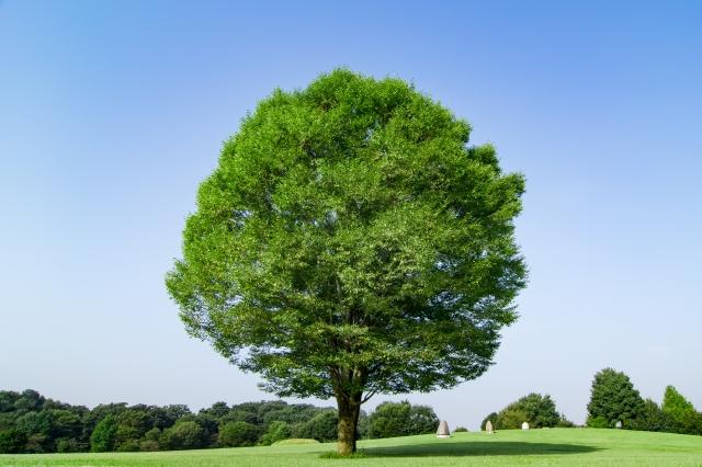 抜根とはどのようなものか?注意点や費用相場、コスト削減法まで伝授
