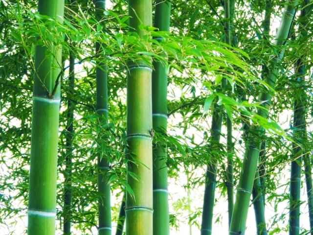 竹を切る時期は秋冬が正解!ただしい伐採時期と、腐敗を防ぐ油抜き法