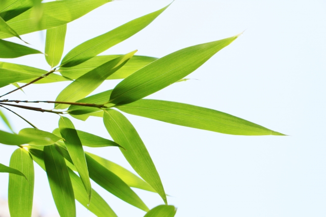竹にまつわる言い伝え、新月伐採と犯土