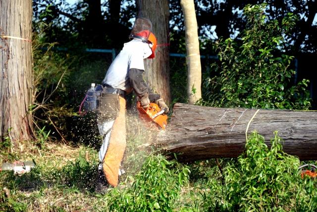 支障木の放置は厳禁!伐採が必要とされる危険な状態について解説