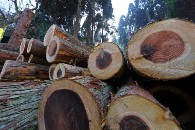 特殊伐採とは?注目の高度な手法、実際の依頼先や費用のギモンに迫る