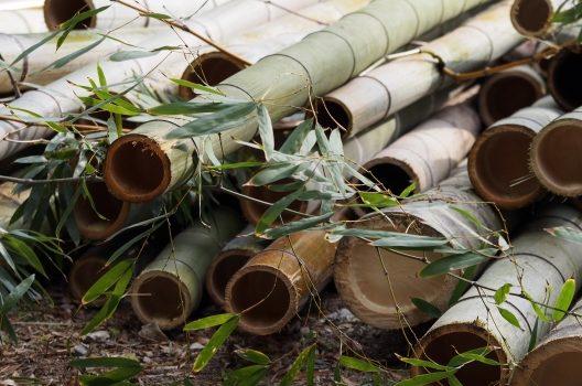 伐採した竹の処理方法