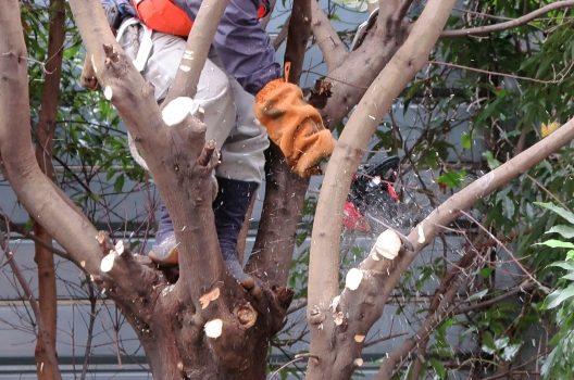 木を切ったあとに塗る薬=癒合剤|効果的に使って大切な庭木を守ろう
