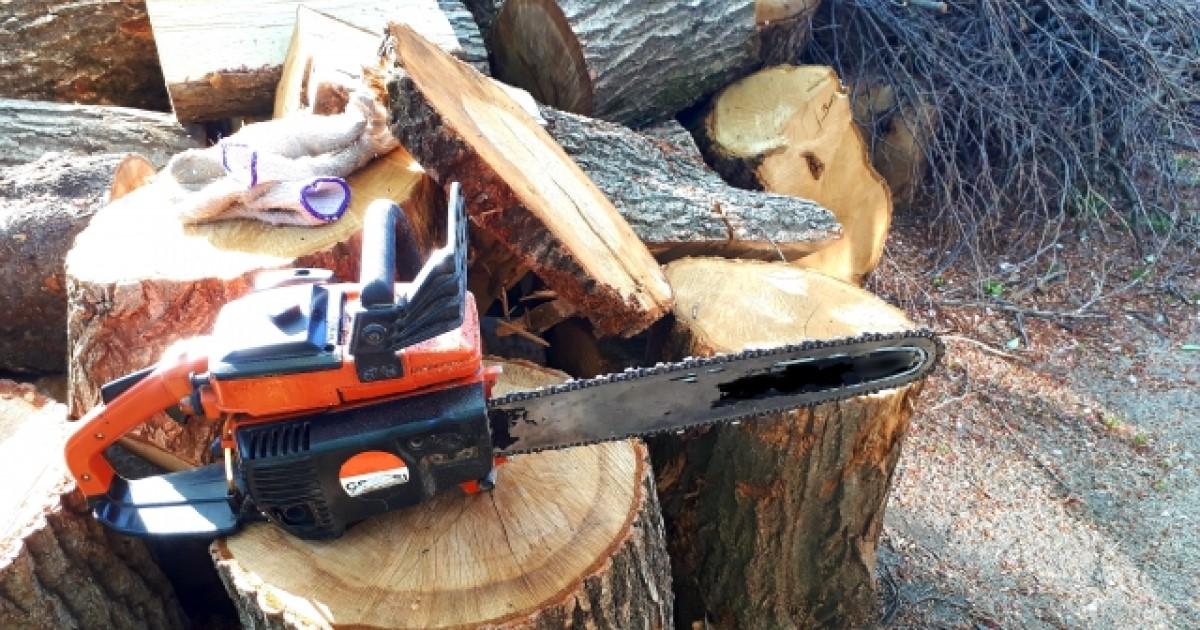 高い木を切る方法や必要な道具