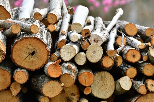 自分で伐採できる木の基準