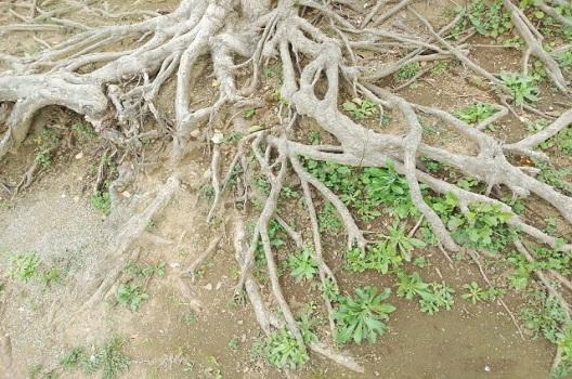 【種類1】根に多い病気