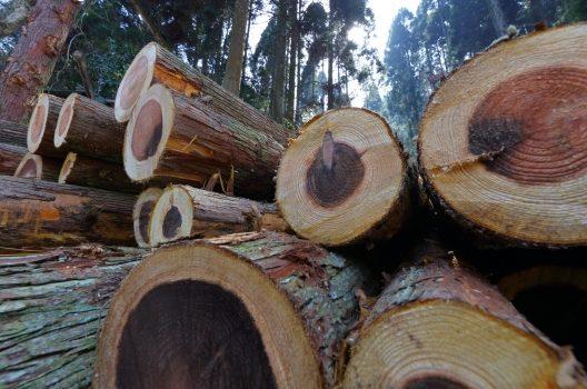 木を切った後の処理方法を解説!切り口のケアやお手入れ・木の処分も