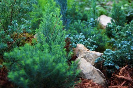 コニファーの伐採費用の計算方法|庭木伐採をしたい方のご相談窓口