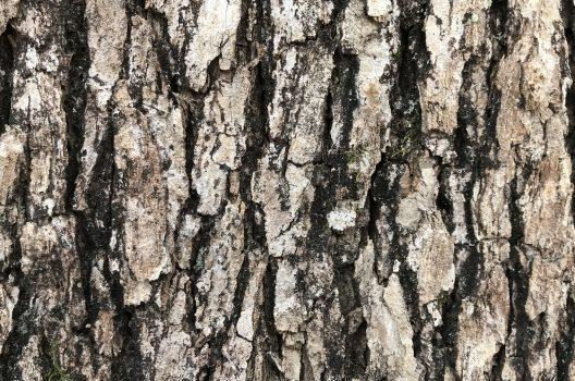 木を枯らす方法|時間かかってもいいから簡単・安全に枯らしたい人へ
