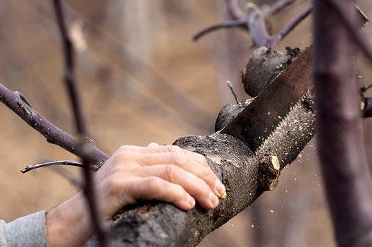 自分で伐採できる条件