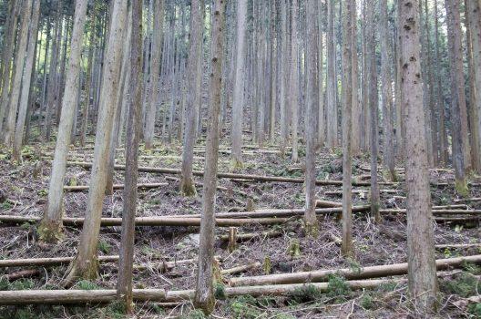 生えている木の密度を調整する役割