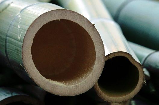 竹の伐採・駆除する時期