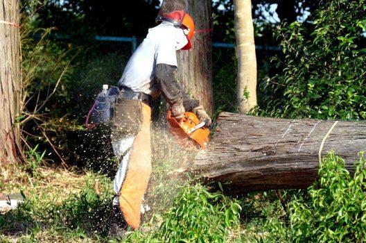 南天の木の伐採|自分でする手順や業者の選び方を解説します
