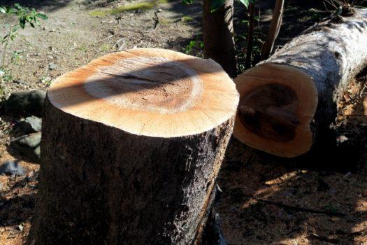 森林での伐採には「伐採届」が必要なこともある