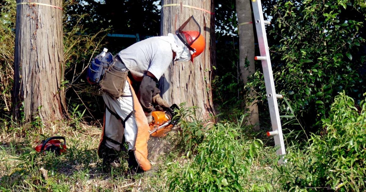 立木伐採 自分