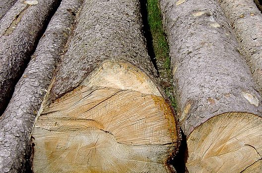 タイトル1 伐採した木の処分はどこに頼めばいいのか。おすすめの方法を解説!