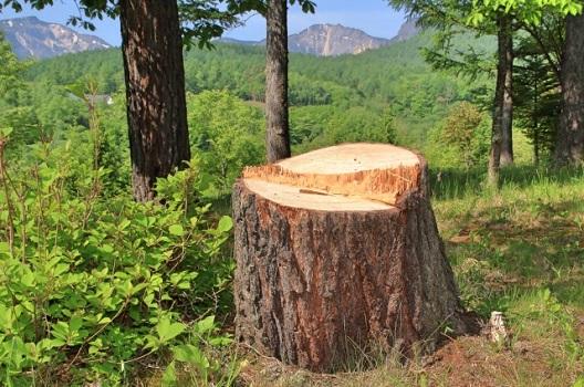 大径木の定義