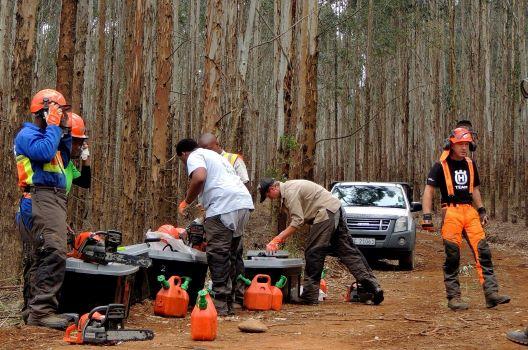 【おまけ】特殊伐採に関連する資格・教育