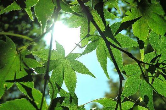 木の生育時期に伐採するのはNG