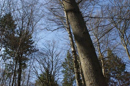伐採の費用は「木の高さ」と「木の広がり方」が基本