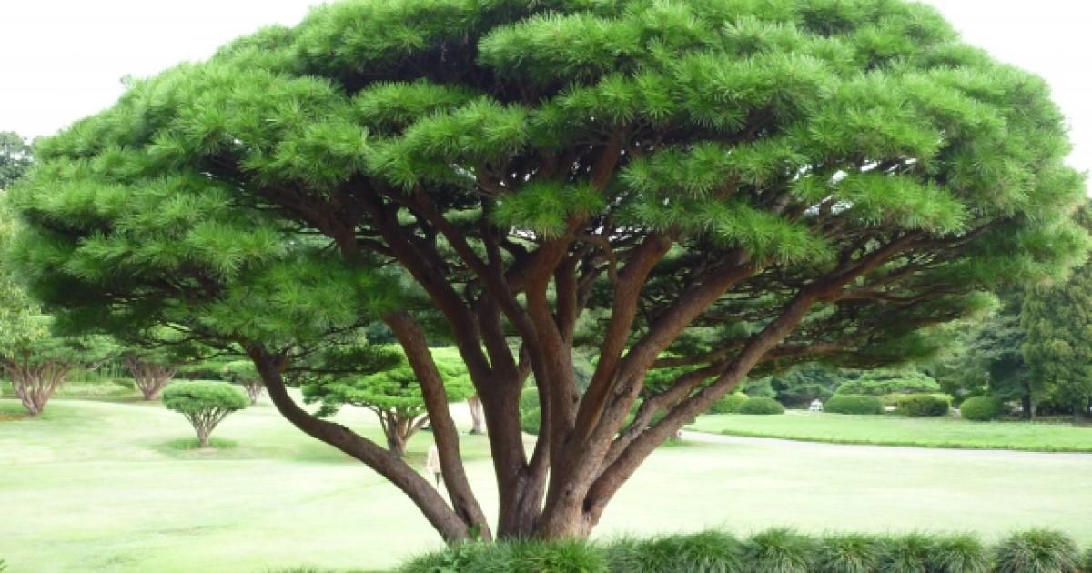 庭木・大木の伐採