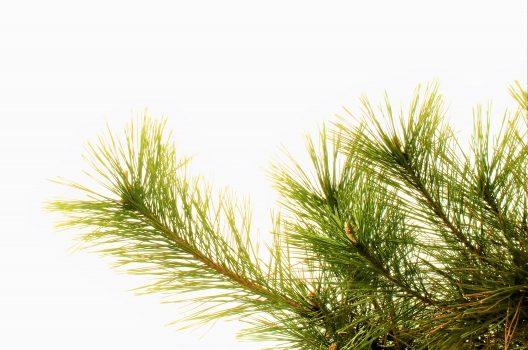 隣の木の枝は伐採してはいけない|トラブルにならないための対処法