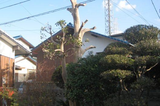 隣の敷地に枝が越境…トラブル内容とは?