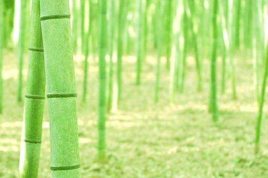 【要注意】竹の抜根は難易度高め
