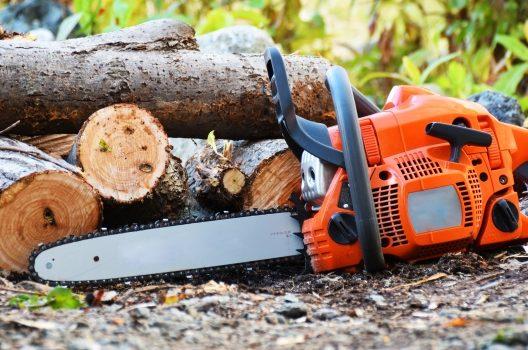 樹木の伐採費用はいくらかかる?業者に依頼した場合の相場について