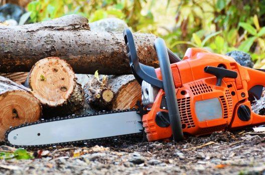 自分で伐採できる基準
