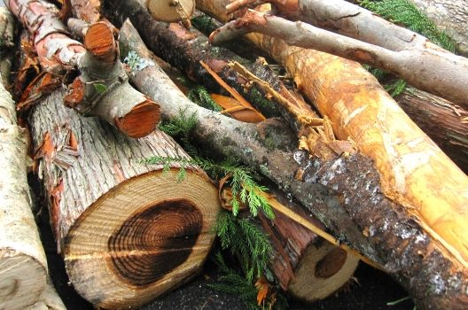 庭木・大木の伐採費用について|費用の決まり方や安くする方法も紹介