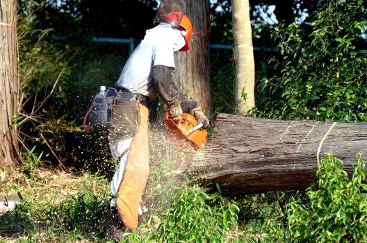 かかり木の伐採方法!間違った方法・正しい処理について詳しく解説