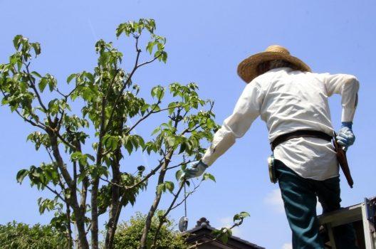 庭木の伐採にかかる費用の相場!放置やDIYは危険なので業者に頼もう