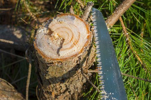 生えている庭木を処分する方法