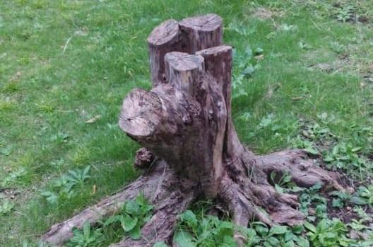 ふたたび木が生えてきてしまう