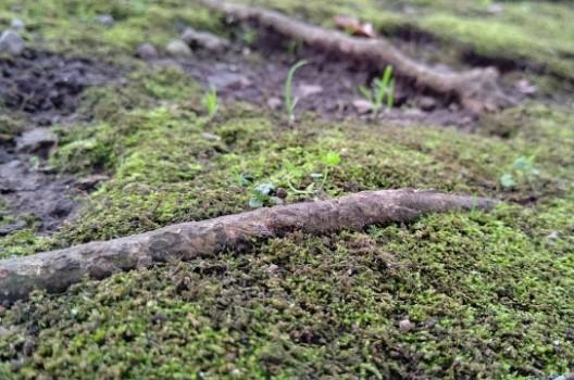 木の根っこを抜くときの注意点